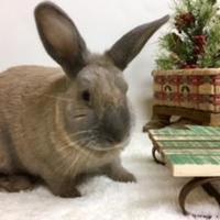 Adopt A Pet :: Carmelita - Dayton, OH