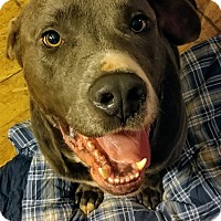 Adopt A Pet :: Moose - Summerville, SC