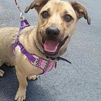 Dachshund Mix Dog for adoption in Royal Palm Beach, Florida - Sammie