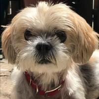 Adopt A Pet :: Dora - Baltimore, MD