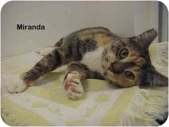 Domestic Shorthair Cat for adoption in Portland, Oregon - Miranda