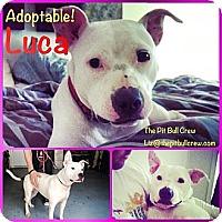 Adopt A Pet :: Luca - Naples, FL