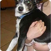 Adopt A Pet :: Pluto - Scottsdale, AZ