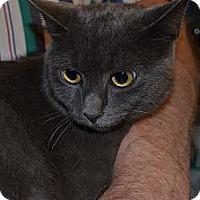 Adopt A Pet :: Blue Bell - Sanford, ME