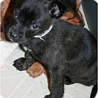 Adopt A Pet :: Rudy - Westfield, IN