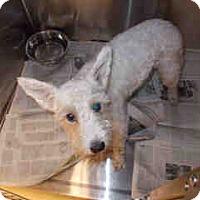 Adopt A Pet :: Stella - Antioch, IL