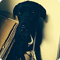 Adopt A Pet :: Hilary - Wayne, NJ