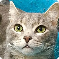 Adopt A Pet :: CHAZ - Burlington, NC