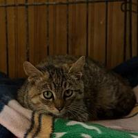 Adopt A Pet :: Charlotte (COURTESY 2-23-17) - Lovingston, VA