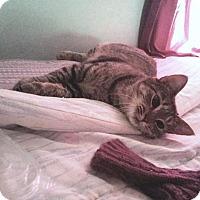 Adopt A Pet :: Lula - Putnam, CT