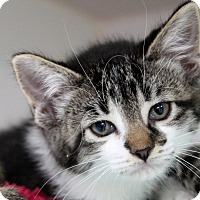 Adopt A Pet :: fiona - Muskegon, MI