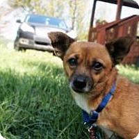 Adopt A Pet :: Janelle - Sparta, NJ