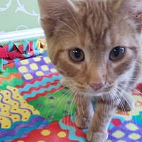 Adopt A Pet :: Aloe - Red Wing, MN