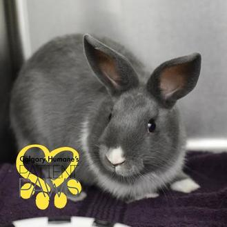 Other/Unknown/Other/Unknown Mix for adoption in Calgary, Alberta - Binky Joel