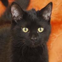 Adopt A Pet :: Boromir - Bristol, IN