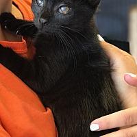 Adopt A Pet :: Scarlett - Island Park, NY