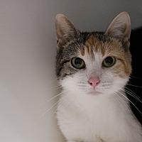 Adopt A Pet :: momma spice - Muskegon, MI
