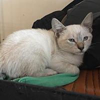 Adopt A Pet :: Cricket - Gainesville, FL