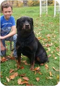 Rottweiler Dog for adoption in Rexford, New York - Atlas