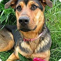 Adopt A Pet :: Jewel - Monteregie, QC