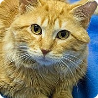 Adopt A Pet :: Holden - Chicago, IL