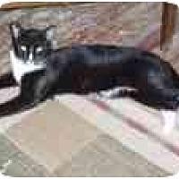 Adopt A Pet :: Hansel - North Boston, NY