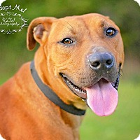 Adopt A Pet :: Mario - Fort Valley, GA