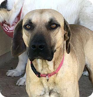 Hound (Unknown Type) Mix Dog for adoption in Austin, Texas - Egypt