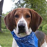 Adopt A Pet :: Hank - Princeton, KY