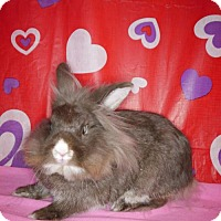 Adopt A Pet :: Godiva - Welland, ON