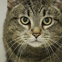 Adopt A Pet :: Oracle - Colorado Springs, CO