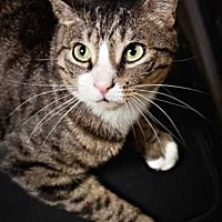 Adopt A Pet :: Cornelius - East Brunswick, NJ