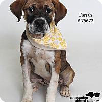 Adopt A Pet :: Farrah  (Foster Care) - Baton Rouge, LA