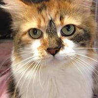 Adopt A Pet :: Peaches - Sewaren, NJ