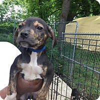 Adopt A Pet :: Henry - Danbury, CT