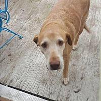 Adopt A Pet :: Queenie - DeRidder, LA