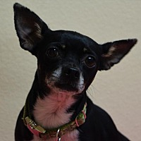 Adopt A Pet :: Tillie - Gridley, CA