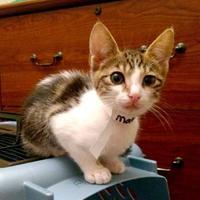 Adopt A Pet :: Matlock - Santa Cruz, CA