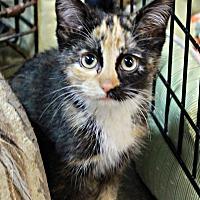 Adopt A Pet :: Poppit - New Richmond,, WI