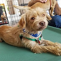 Adopt A Pet :: Butters - Fountain Valley, CA