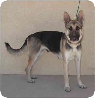 German Shepherd Dog Dog for adoption in Las Vegas, Nevada - Leela