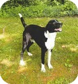 Border Collie Mix Dog for adoption in Coeburn, Virginia - Buddy