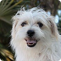 Adopt A Pet :: Baby Theodore - Davie, FL