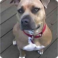 Adopt A Pet :: Lady - Bakersfield, CA