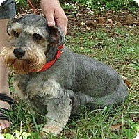 Adopt A Pet :: Sweet Betsy - Ocala, FL