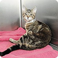 Adopt A Pet :: Emerald - Farmingdale, NY