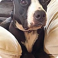 Adopt A Pet :: Lani - Honolulu, HI