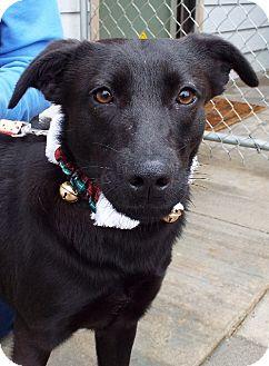 Labrador Retriever Mix Puppy for adoption in Grants Pass, Oregon - Mary Jane