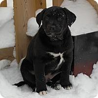 Adopt A Pet :: Cupcake - Hamilton, ON