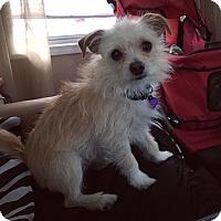 Adopt A Pet :: Romeo - Davie, FL
